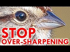 How to Sharpen Your Photos in Lightroom Without Going Too Far.and do they have one for overcoloring! Nature doesn't even look like nature any more! Photoshop For Photographers, Photoshop Photography, Photography Tutorials, Digital Photography, Photography Tips, Photoshop Actions, Creative Photography, Adobe Photoshop, Portrait Photography