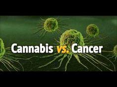How Cannabis Oil Cures Cancer - YouTube