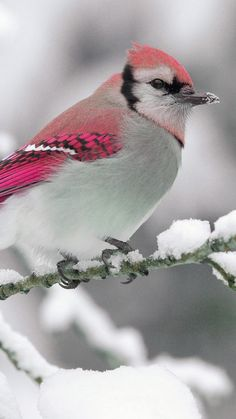 Beautiful bird with Bright Pink feathers