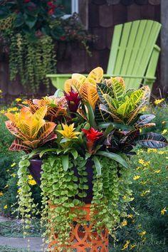 Gardening Tropical 43 Gorgeous Container Garden Flowers Ideas For Summer, Container Flowers, Container Plants, Container Gardening, Container Design, Indoor Gardening Supplies, Tropical Garden Design, Tropical Gardens, Tropical Flowers, Fall Containers