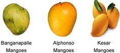 Each mango variety has a unique taste and flavour. The mostly cultivated…