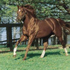 Big Red - Secretariat.  Most Beautiful horse I seen