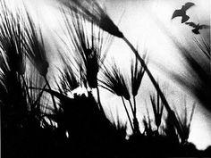 Afbeeldingsresultaat voor Mario Giacomelli fotograaf