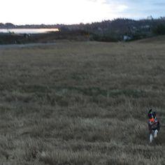 Kiddo  #Carlsbad #California #hike #puppylove #puppies #sunset #dog #dogsofinstagram #pepper #carlsbadlagoon by lakaeli
