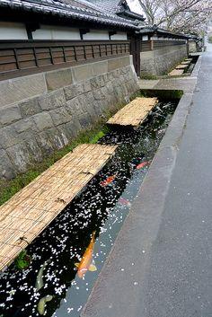 https://flic.kr/p/9FffyX | Carp fish swimming in roadside open culverts, Obi, Japan |