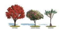 Escolha a melhor árvore para calçada, fachada ou beira de piscina e aprenda a plantar e cuidar