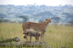 Savannah Safari - This 10 night fly-in safari visits some of Kenya's finest game parks and reserves. Starting in Nairobi National Park it continues to Ol Pejeta Conservancy