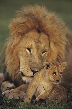Male and cub | www.frontiergap.com | #animals #volunteer
