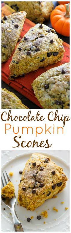 Classic and crumbly, these tender pumpkin scones are exploding with mini chocolate chips!