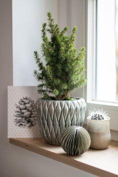 Minitannenbaum im Bl