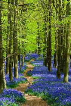 Landscape Photography Tips: Spring landscape photography tips 5 - bluebells Beautiful World, Beautiful Places, Beautiful Pictures, Beautiful Forest, Beautiful Scenery, Beautiful Flowers, Forest Path, Forest Trail, Forest Garden