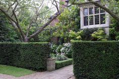 Hedges to create garden privacy. Judy Green suburban London garden Daphne Walker ; Gardenista