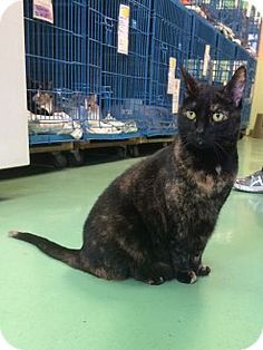 Tia is a cat up for adoption at the Humane Society of New York.