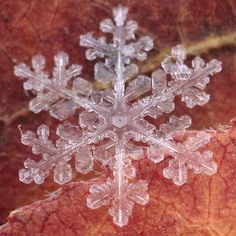 A Real Snowflake on Aspen Leaves.