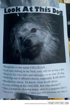 The funniest lost dog sign you will ever see.  #dogs #lostdog