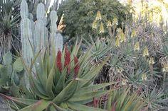 More desert gardens