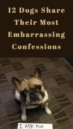 LOL, I almost fell out of my chair on the first one! http://theilovedogssite.com/12-dogs-share-their-most-embarrasing-confessions/