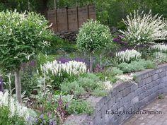Rabatt i lila, rosa och vitt. Garden Design Images, Landscape Design, Love Garden, Herb Garden, Back Gardens, Outdoor Gardens, Landscaping A Slope, Garden Gadgets, Garden Makeover