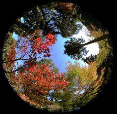 多良峡森林公園 魚眼レンズ