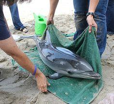 marine mammal rehabilitation