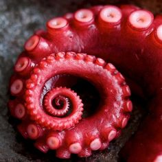 The Fibonacci Sequence is often seen in nature - but an Octopus tentacle is my favorite example so far!