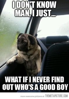 Funny pictures about Introspective pug questions his life. Oh, and cool pics about Introspective pug questions his life. Also, Introspective pug questions his life. Pug Meme, Funny Dog Memes, Funny Dogs, Funny Shit, Funny Animals, Pug Jokes, Funny Stuff, Cute Animals With Funny Captions, Farts Funny