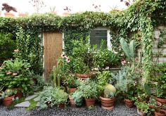 A cluster of plentiful pots in the corner of a balcony or courtyard is easily the quickest and most cost effective solution for a renter's outdoor space.