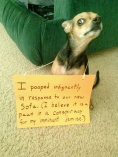 This doggie has a great vocabulary!