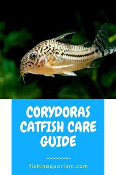 20 Gallon Aquarium, Catfish Recipes, Fish Tanks, Freshwater Aquarium, Fishing Tips, Fresh Water, Lol, Future, Pets