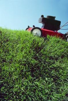 Even the best-laid lawns can go awry without a schedule to keep important tasks on track. Mowing, watering and fertilizing the lawn at the right time can make the difference between a healthy, thick ...