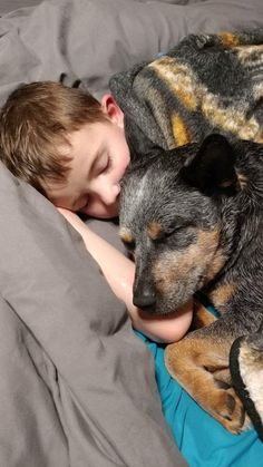 Cattle dog protection