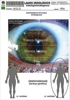 Blog de cursoiridologia : IRIDOLOGIA - CURSO DE IRIDOLOGIA A DISTÂNCIA, MODELO DO LAUDO IRIDOLÓGICO - ÁREAS SETORIAIS DO PÓLO MAGNÉTICO DO ORGANISMO