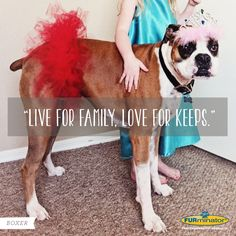 "Boxer Motto : ""Live for Family. Love for Keeps."" Spoken like a true BFF! (Nice job FURminator)"