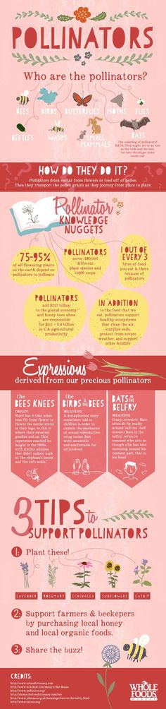 Who are the pollinators, why are they important to us, and what should we be doing to protect them?