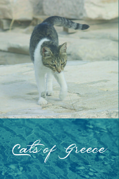 I came across these Grecian cats on a trip some years ago. Journeying to foreign lands has almost always been spurred by my desire to explore a fresh landscape for one of my books. This was no exception. Book Lovers, Cat Lovers, Life Partners, Almost Always, My Books, Greece, Creatures, Romance, Fresh