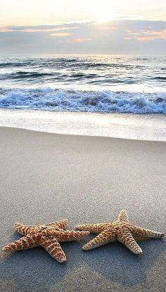 Beach Buddies - #Starfish #Ocean
