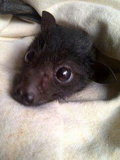 Baby bat! I love you!
