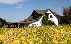 Goosecross Cellars, Napa Valley~ My favorite winery to have ever visited.