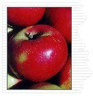 Apple Journal- Apple Use- page 1 Akane-Ben Davis