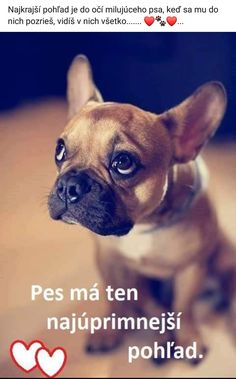 Motto, Animals And Pets, French Bulldog, Sad, Humor, Memes, Dogs, Cute, Animal Pictures