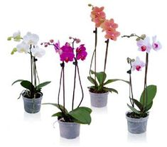 Top 10 Types Of Orchids That Are Easy To Grow - Orchid Farm