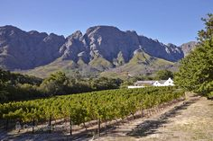 Boekenhoutskloof vineyards and winery 5 minutes from La Clé des Montagnes- 4 luxurious villas on a working wine farm Provinces Of South Africa, Cape Dutch, Visit South Africa, Dutch House, Namibia, Holiday Destinations, Cape Town, Lodges, Vineyard