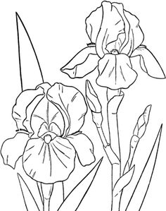 Bearded Iris - Spring Flowers Coloring Pages Flower Coloring Pages, Colouring Pages, Coloring Pages For Kids, Coloring Books, Iris Flowers, Colorful Flowers, Silk Painting, Painting & Drawing, Pictures Of Spring Flowers