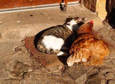 La Charvière: Knuffelen op de deurmat....