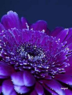 Прекрасный цветок