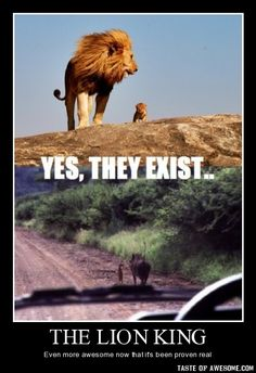 - The Lion king. Apparently a true story. Love how Timon and Pumbaa are just walking down the road - it even looks like the meerkat is actually talking to the warthog in the picture.