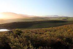 Overberg Wine Route: Gabrielskloof , Restaurant, Wine Tasting, South Africa, Hermanus, Südafrika