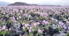 Flores nascem em área destruída por incêndio na Chapada Diamantina (BA)