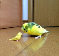 Parakeet playing with mini bird, so cute! Funny Birds, Cute Birds, Pretty Birds, Cute Funny Animals, Cute Baby Animals, Beautiful Birds, Animals Beautiful, Animals And Pets, Exotic Birds