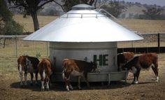 Cattle Feeder !